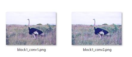 ostrich1_c